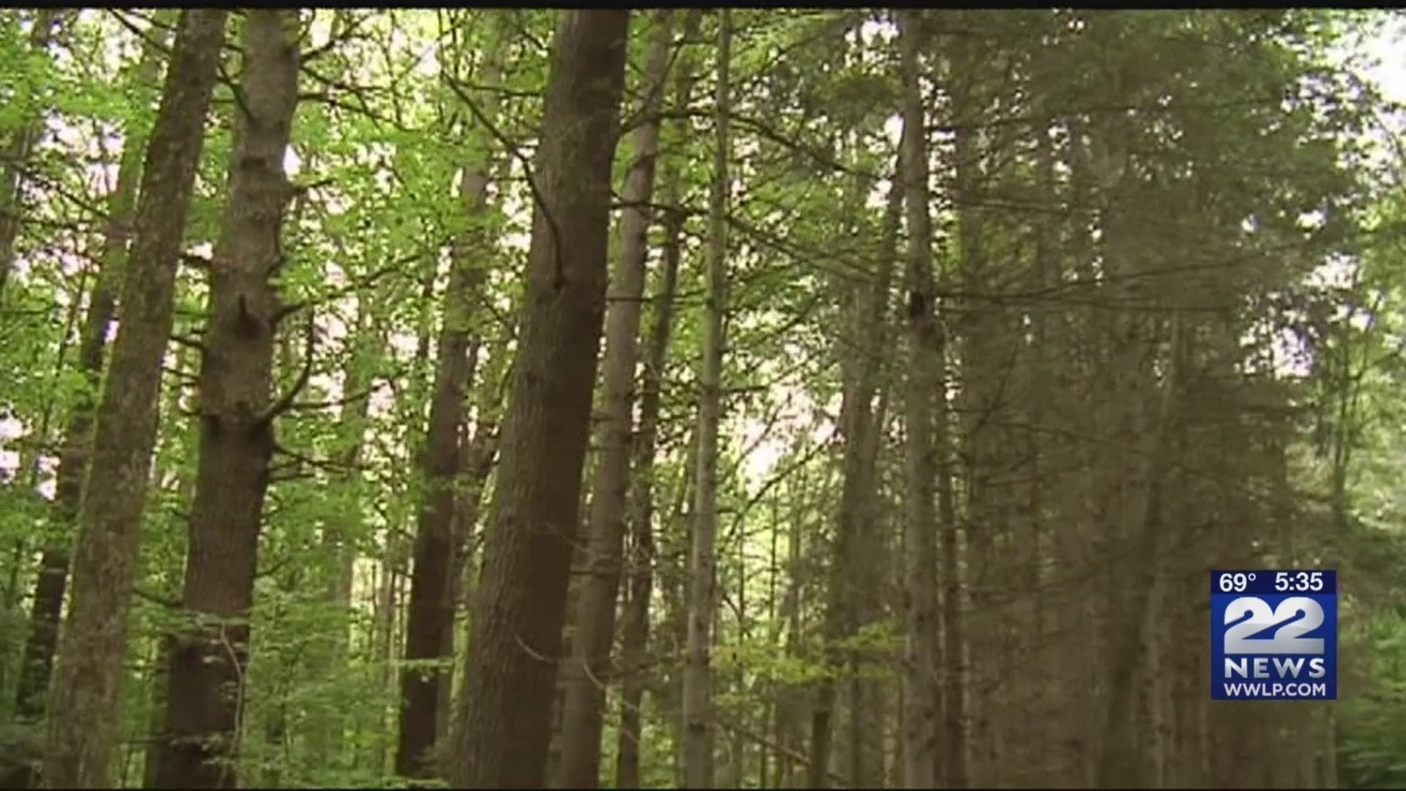 Western Massachusetts residents petition Governor to stop logging in state fores...