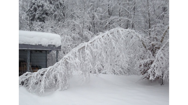 Over 10 inches of snow fell in parts of western Massachusetts Monday night