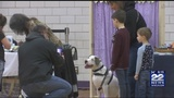 Holyoke parks and rec dog show back by popular demand