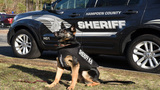 Hampden County Sheriff's Department dog receives new protective vest